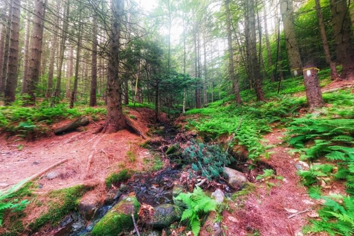 Mohawk Trails