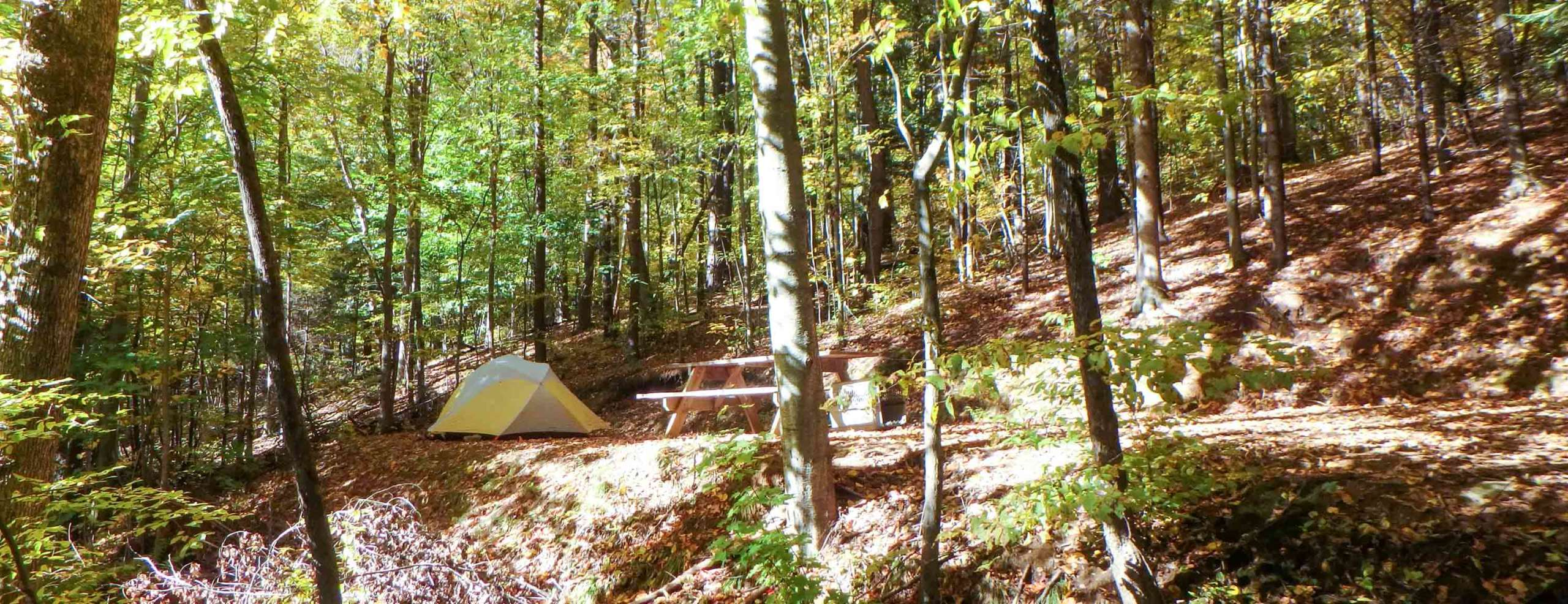 Tents set up in the woods