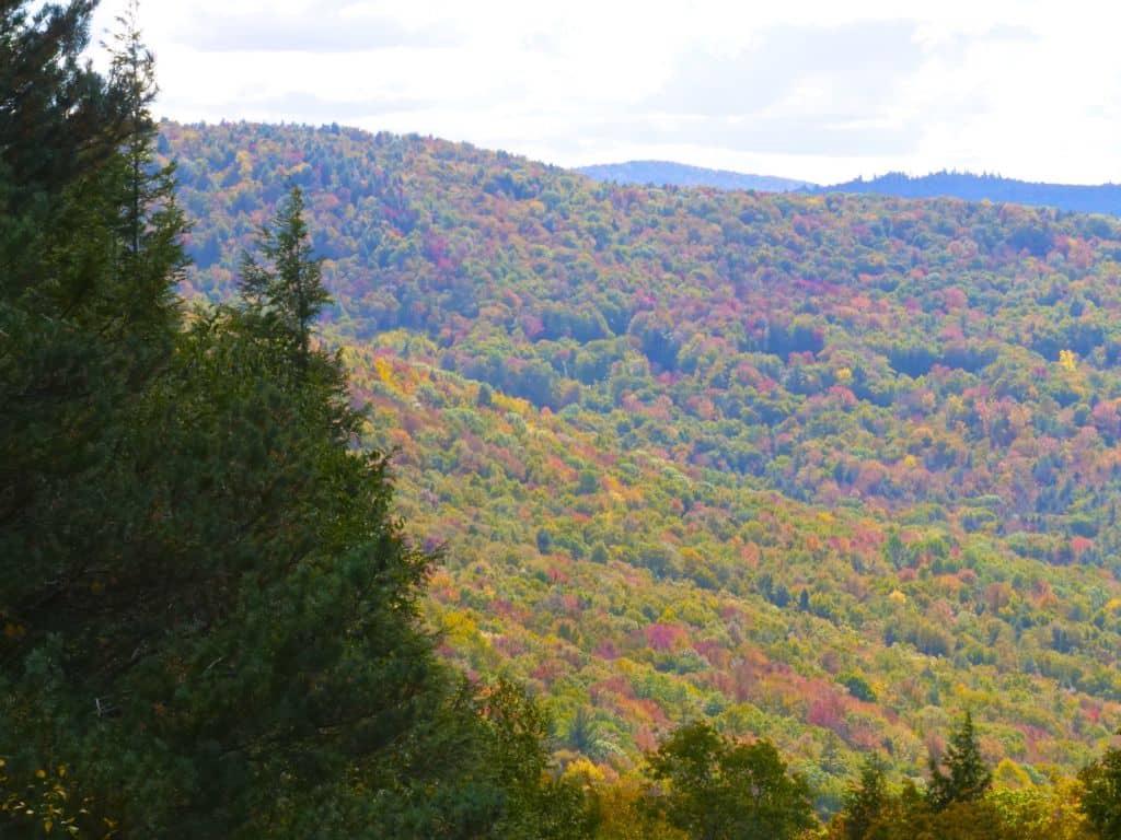 Fall foliage for ziplining