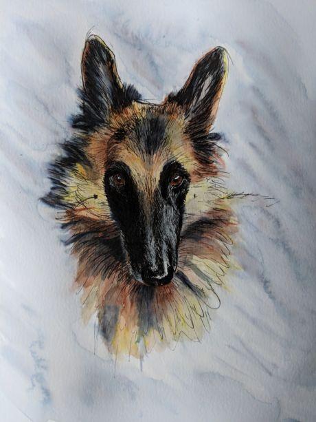 A german shepard drawn on paper